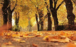 澳洲墨爾本秋遊最佳景點