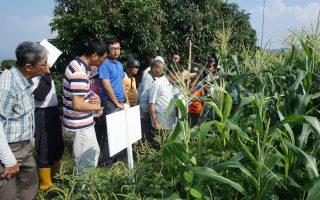農藥減半不是夢 農試所研發安全除草資材