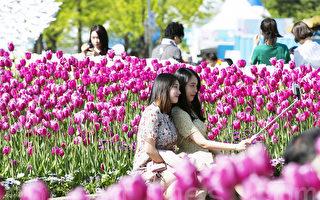 組圖:韓國高陽花卉博覽會繽紛登場