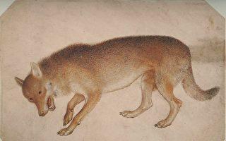 成语典故:狼子野心