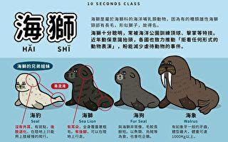 海狮海狗傻傻分不清?这张图10秒分辨让人啧啧称奇