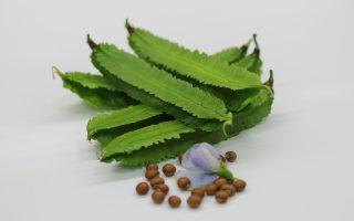 翼豆营养价值高 台东推新品种增加产量