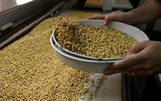 下令广种大豆 却扩大进口 中共戏弄东北农民
