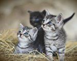 哈爾濱三寵物貓染疫後被安樂死 網絡熱議