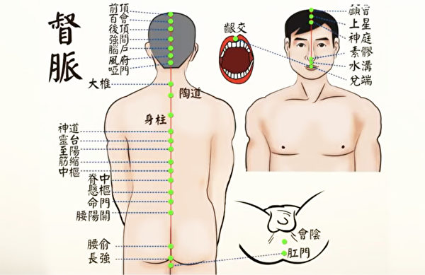 任督二脈之督脈:從長強穴到齦交穴。(談古論今話中醫提供)