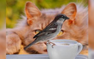 小鳥太可愛 霸氣貓皇秒變呆萌小貓咪