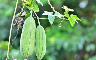 立夏吃瓜 补水又减肥 5种瓜各有养生功效
