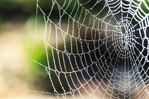 蜘蛛吐的丝很纤细,结成的蜘蛛网,若不仔细看,很难看到它的存在。(pixabay)