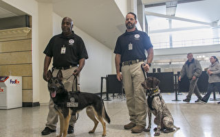 安檢任務重  加州奧克蘭國際機場請狗幫忙