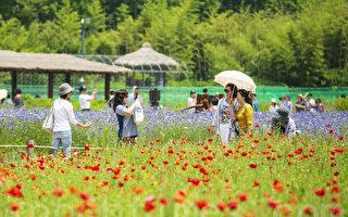 组图:韩国仁川大公园繁花盛开 美不胜收