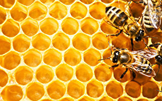 西澳蜂蜜业的机遇与挑战