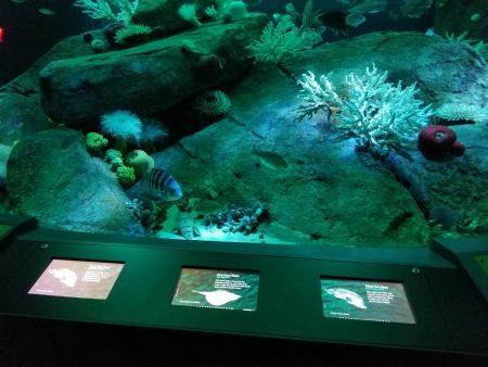 展览馆设置互动触控萤幕导览海中生物介绍。