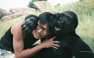 与金刚猩猩在一起 保育员总打赤膊 背后原因很有趣