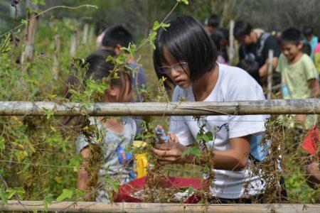 親愛國小學童參與台灣大豆採收。