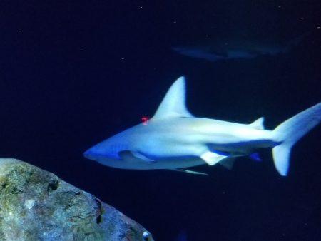 鲨鱼悠游在为它们打造的水世界中。