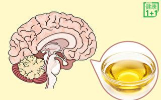"""大脑主体是""""油脂"""" 食用油影响巨大"""