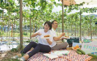 乐活农村新体验 头社推夏季野餐趣