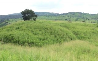 大肚山5年造林计划 复育天然林还原生态