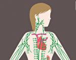 你的身體有毒嗎?營養師教你從5個部位排毒(下)