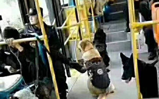 警犬都上公交车了。(知情人提供)