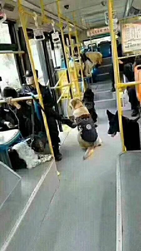 警犬都上公交車了。(知情人提供)