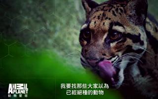 《滅絕動物大追蹤》查消失35年的台灣雲豹