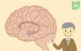 百歲依然記憶力驚人 祕密在於腦中海馬體