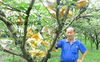 喝豆漿的水梨長大了 颱風天仍熱銷出貨
