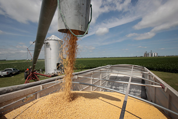 美國大豆。