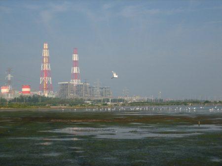 永安湿地与兴达电厂。
