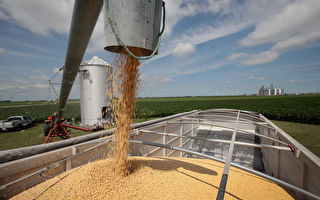 中美貿易戰 中共暗給美國大豆進口商補貼
