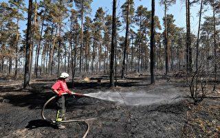 天乾物燥 德國發布森林火災預警