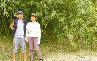 青農用心拼綠金 讓新北綠竹筍更優更安心