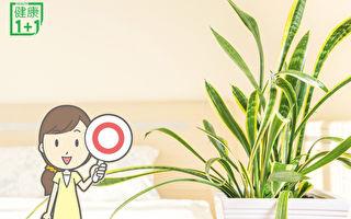 10种植物除甲醛、助眠 是天然空气净化机