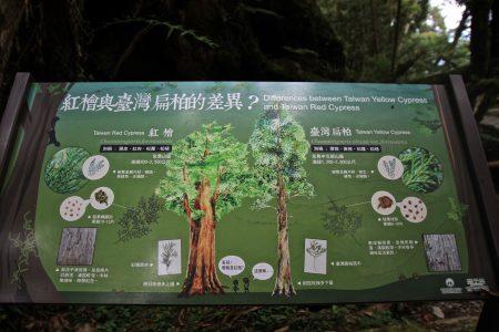 桧木与台湾扁柏的区别。