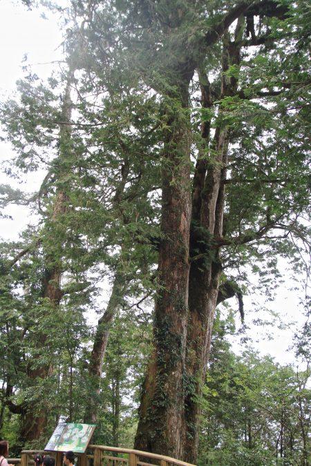第51颗袁崇焕-森林疗愈以身体六感体验和森林大自然的对话。