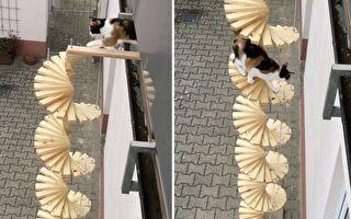 最有创意出门方式 主人为猫咪搭专属旋转楼梯