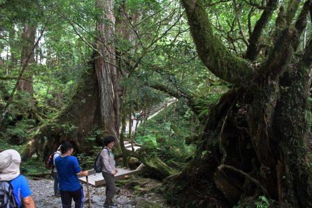 森林疗愈,经导覧解说以身体的六感与森林大自然对话。