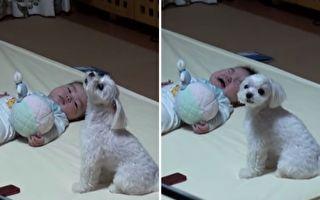 宝宝听小狗嚎叫上瘾?只要萌狗不叫就哭闹