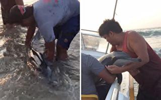 小海豚一再被大浪冲上岸 他们用这妙招救援