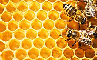 西澳麦卢卡蜂蜜首批产品上市
