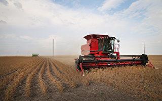 12月和1月供应吃紧 中国豆商代表团访美