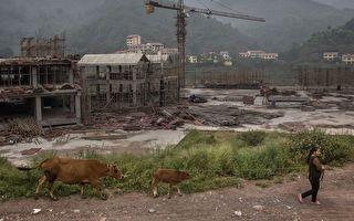 內蒙古爆發牛炭疽 疫區民眾談數百頭牛染病