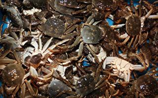污水侵襲 江蘇大閘蟹產區2萬畝蟹幾乎死絕