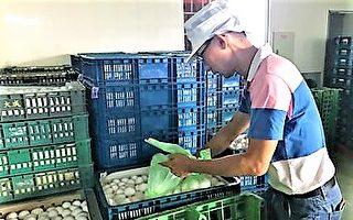 蛋品含菌重罰30萬  中市:煮沸可食