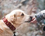 狗兒是我山中探險的好伴侶。(Pixabay)