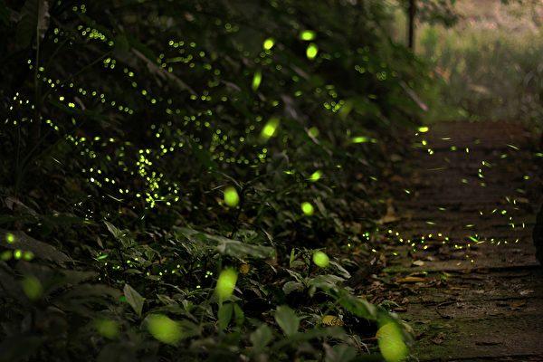 感受黑暗中的灿烂,天上繁星闪烁,草丛间萤光飘移。(pixabay)