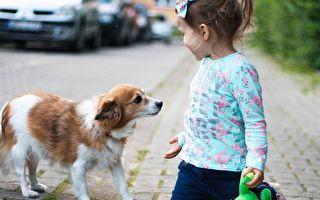 女儿过敏又爱狗 父母想办法解决她哭成泪人