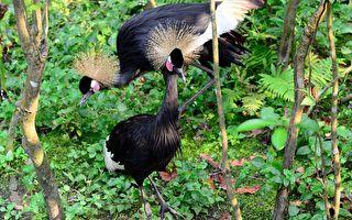 两对鸟夫妻互不相干 却因一个机缘促成佳话