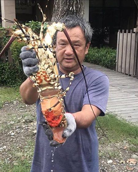台渔民捕获罕见抱卵大龙虾 海产店买下放生